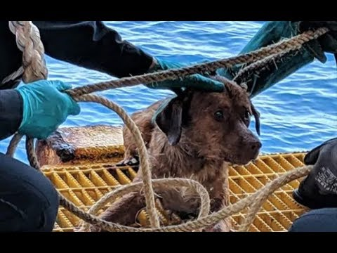 Dog rescued 135 miles from Thai coast