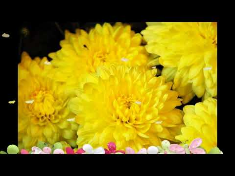 Beautiful yellow flowers top good morning wishes greetings images beautiful yellow flowers top good morning wishes greetings images with yellow flowers for himher mightylinksfo