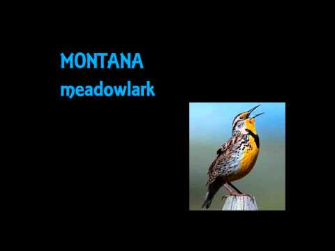 US STATE BIRDS SLIDESHOW