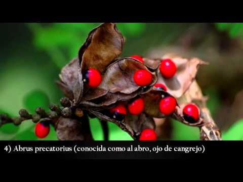 10 plantas más letales del mundo - plantas venenosas
