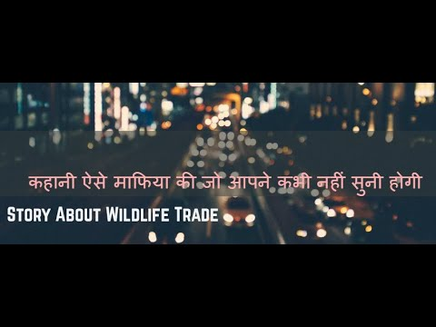 Story About Wildlife