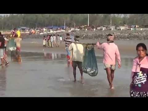 Incredible India Tour | Awesome Sea Fishing  In The Bay Of B