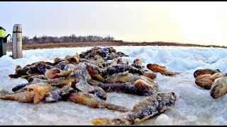Они отрывали блесна! Хороший клев 2018! Зимняя рыбалка.