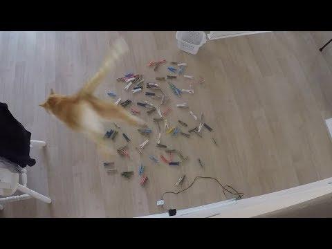 100 PEG PRANK ON CATS