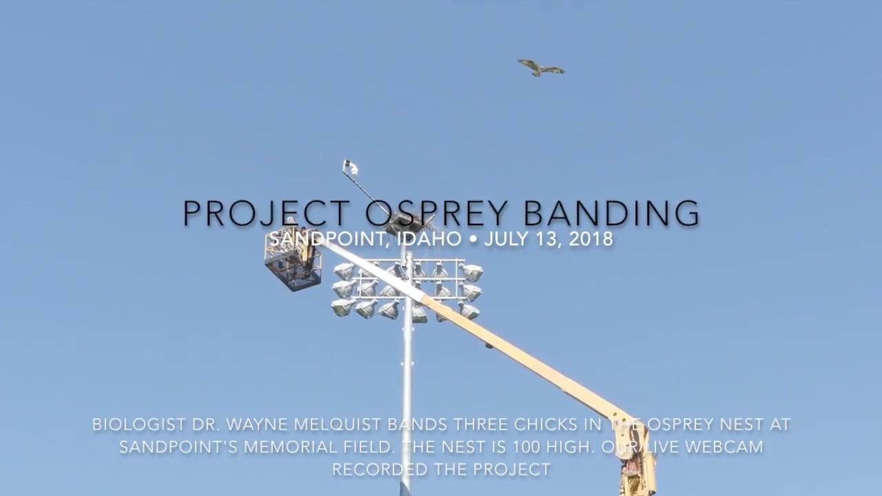 Sandpoint Osprey Cam - Sandpoint Online - Live streaming web ...