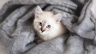 How to Prevent a Cat from Spraying | Cat Care