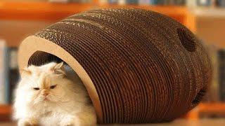 Домик для Кошки из картона.