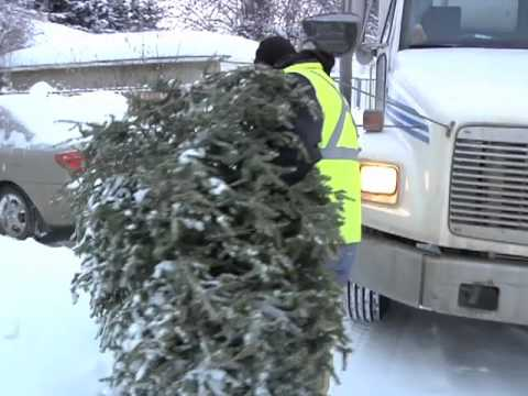 Recycle your Christmas tree - Recycle your Christmas tree