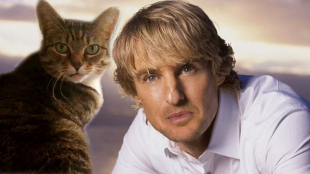 Owen Wilson As A Cat Youtube