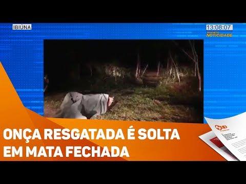 Onça resgatada é solta em mata fechada - TV SOROCABA/SBT