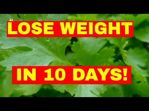 How to Lose Weight Fast (IN 10 DAYS)
