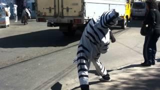 La famosa cebra bailarina de La Paz Bolivia