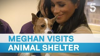 Meghan Markle called 'fat lady' as she visits Mayhew animal shelter | 5 News
