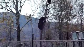 Bear Attack and How to Escape by Climbing Up a Tree