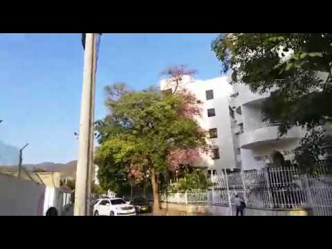 Guayacán rosado florece y adorna las calles de Santa Marta