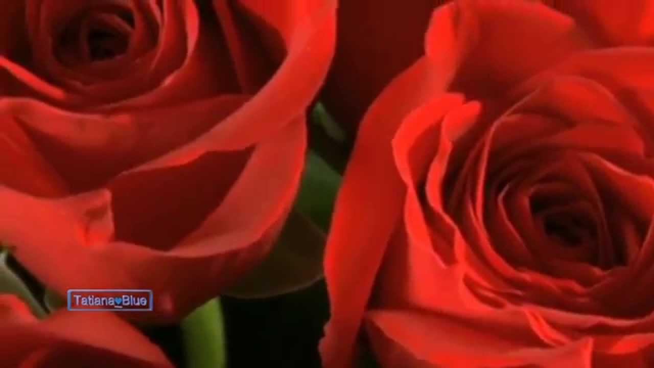 francis-goya-million-roses-tatiana-blue-2