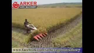 Rice Cutter Machine at Bangladesh