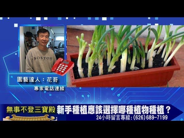 新手種植應該選擇哪種植物種植?