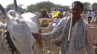 Kannur farmers arrived in horti on bullock cart