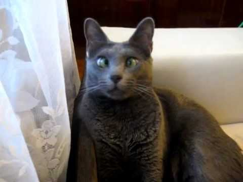 смешной котик gif