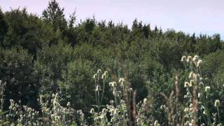 Sakupljanje samoniklog bilja kao izvor dodatne zarade