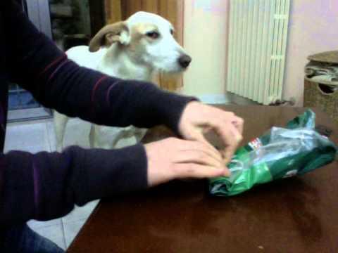 Tutorial per creare un gioco per cani da una confezione da for Impermeabile per cani fai da te