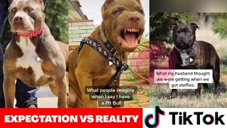 dog expectation vs reality tiktok | What I thought my dog would be like 😂