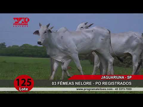 LOTE 125