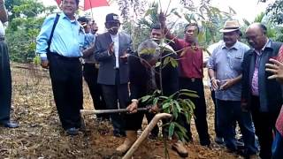 Ephorus HKBP Pdt DR Darwin Lumbantobing Tanam Pohon di HKBP Distrik Center XXV Jambi Mp3
