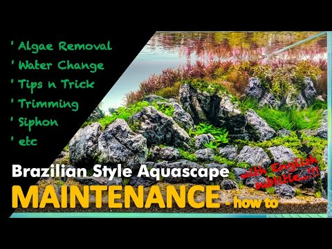 AQUASCAPE MAINTENANCE - Brazilian Style (with ENG subs)