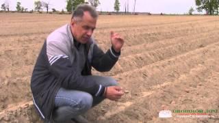видео Технология выращивания картофеля