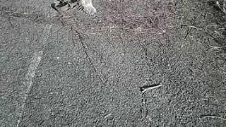 Дрессировка собак.Маленькая Шери 7 мес