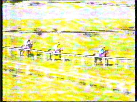 1995 - Punchestown - Woodchester Downshire Hurdle - Fortune and Fame