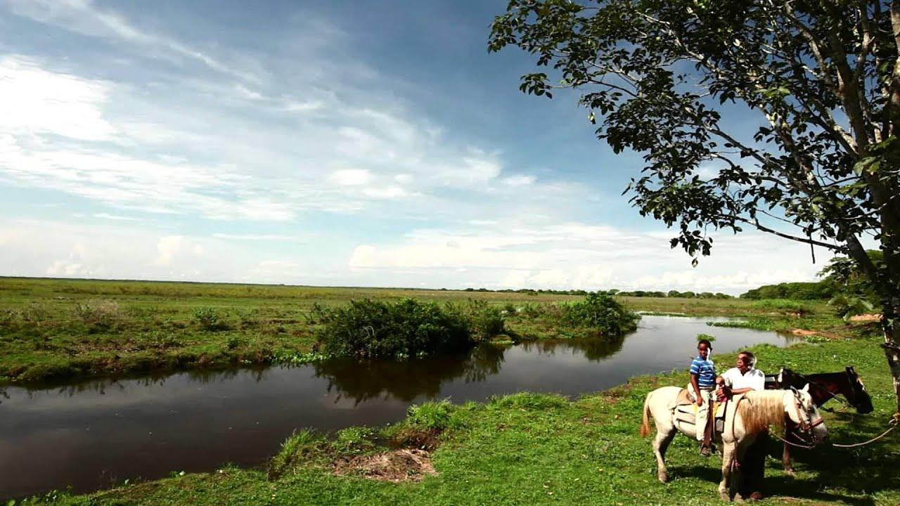 Campaña del BCV Especies para Cuidar. Versión Llanos ...