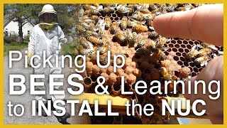 Beginning Beekeeping: Learning to Install the Nuc Hives