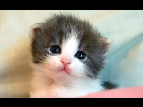 Thumbnail: Cute Kittens And Funny Kitten Videos Compilation 2016
