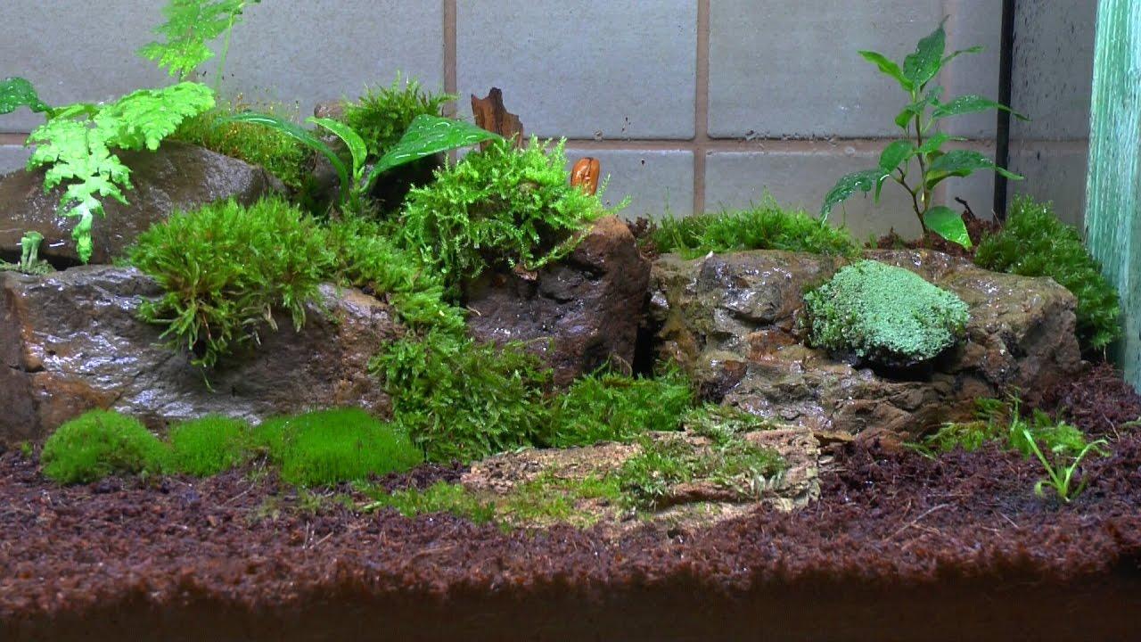 ein ewiges oder zeitweise terrarium f r pflanzen teil 4 morsches holz und asseln youtube. Black Bedroom Furniture Sets. Home Design Ideas