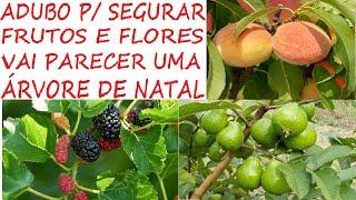 Adubo que faz sua Frutífera segurar Frutos e Flores