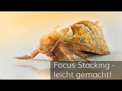 Focus Stacking - leicht gemacht!