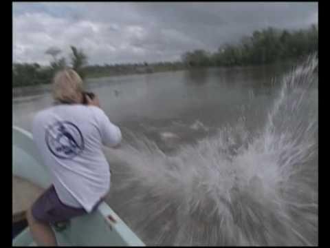 Extreme Tarpon Fishing in San Carlos Nicaragua