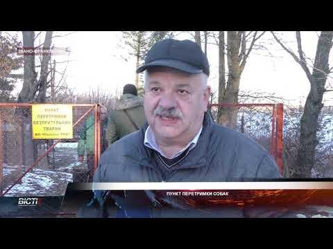 В Івано-Франківську запрацював перший комунальний пункт перетримки безпритульних тварин