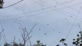 Le ciel nous est tombé sur la tête : La pluie d'araignée.
