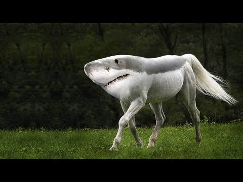 12 Mysterious Creatures Created By Scientists