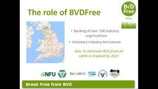 AHDB Webinar - BVDFree England