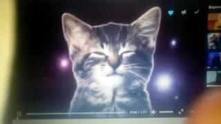Как поют мои котята !!!СМОТРЕТЬ ВСЕМ!!!