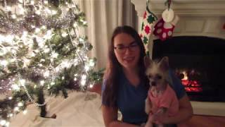 Are Chinese Crested High Maintenance?