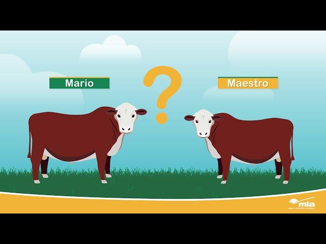 MLA - Beef Estimated Breeding Values
