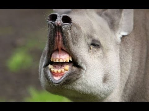 Funniest Animals - Try Not To Laugh - HILARIOUS!! 2019 #1