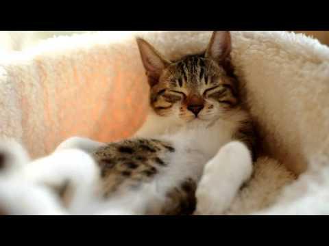 Кот тащусь