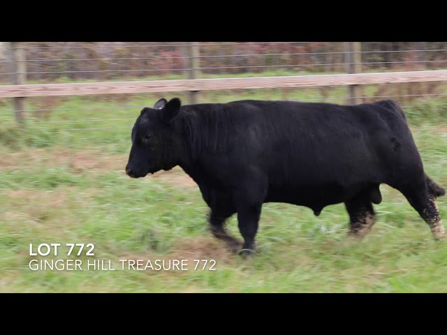 Ginger Hill Angus Lot 772